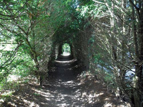 Der schönste Weg zum Strand führt durch den alten Kurpark.